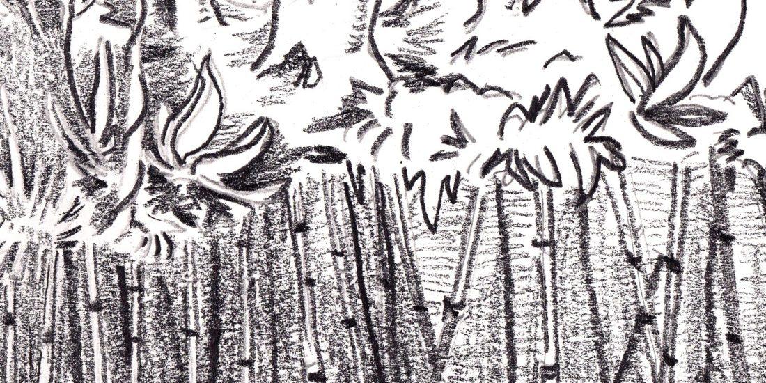 Dessins au crayon illustrant la biodiversité costaricienne, les efforts pour la préserver et leurs contradictions